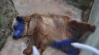 дете-боядиса-мечката-във-варненския-зоокът-9249.jpg