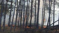 пожарът-край-свиленград-продължава-да-бушува-9819.jpg