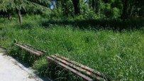 аспаруховият-парк-във-варна-заприлича-на-джунгла-45117.jpg
