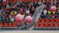 деца-с-увреждания-се-радваха-на-делфините-във-варна-45350.jpg