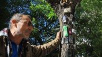 варненски-клошар-превърна-сухо-дърво-в-странна-арт-инсталация-49909.jpg