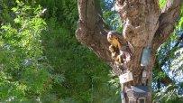 варненски-клошар-превърна-сухо-дърво-в-странна-арт-инсталация-49912.jpg