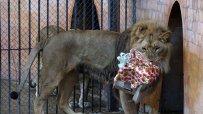 малкият-принц-от-варненския-зоокът-празнува-рожден-ден-50069.jpg