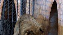 малкият-принц-от-варненския-зоокът-празнува-рожден-ден-50071.jpg