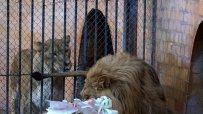малкият-принц-от-варненския-зоокът-празнува-рожден-ден-50072.jpg