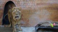 малкият-принц-от-варненския-зоокът-празнува-рожден-ден-50074.jpg