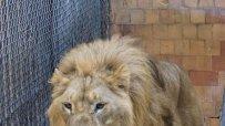малкият-принц-от-варненския-зоокът-празнува-рожден-ден-50075.jpg