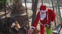 Дядо Коледа раздаде подаръци на животните във Варненския зоопарк