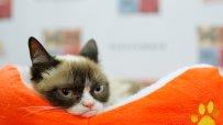grumpy-cat-спечели-дело-за-710-000-долара-53427.jpg
