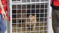 лъвчетата-терез-и-масуд-заминаха-за-холандия-53767.jpg