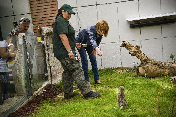 йорданка-фандъкова-откри-две-реновирани-местообитания-в-зоологическата-градина-57822.jpg