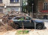 Дърво падна и потроши две коли в центъра на София