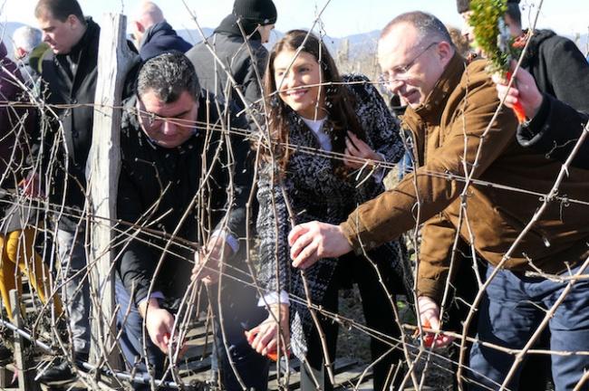 Министър Порожанов: Лозовите масиви в България се увеличават всяка година