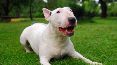 Куче се върна след пет години в дома си