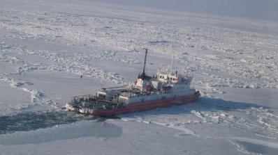 Близо 50 делфина са блокирани от ледовете в Азовско море