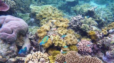 Кораловите рифове изчезват