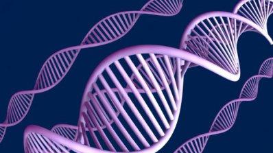 Откриха гените, които отговарят за формата на лицето