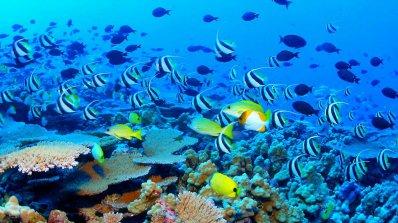 Големият бариерен риф е изгубил половината от своя масив за последните 27 години
