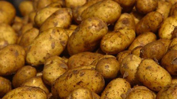 Откриха заразени гръцки картофи