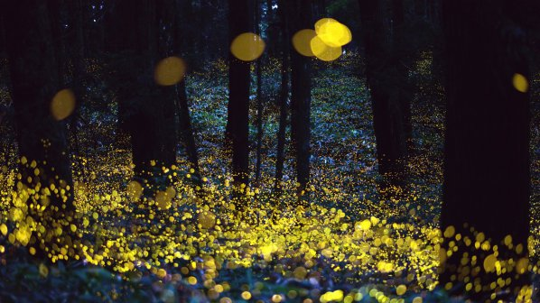 Светулките вдъхновяват LED иновация