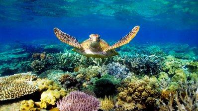 Големият бариерен риф ще изчезне до 20 години
