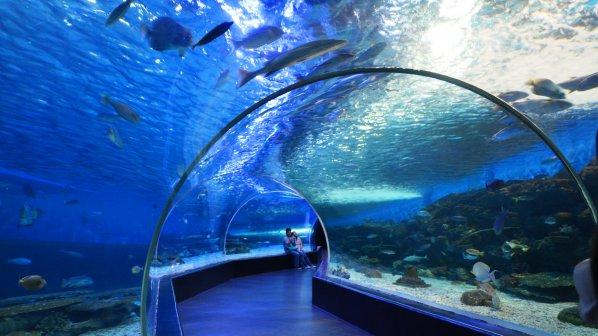 Бургас може да остане без Океанариум