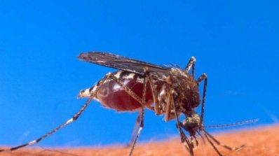 Внимание! Гръцки комари носят малария