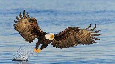 Половината птици в Северна Америка може да изчезнат