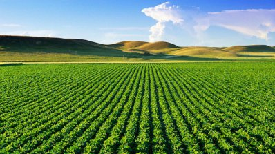 Зеленчукопроизводителите поискаха по-големи субсидии