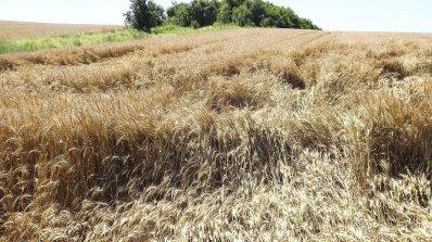 Забавянето на европарите ще свали още цената на земята