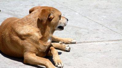Нощни боеве с кучета потресоха село