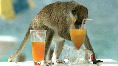 Учени: Човекът еволюирал благодарение на алкохола