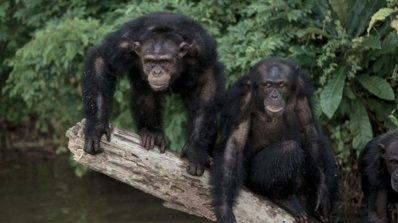 Планетата на маймуните наистина съществува (видео)