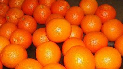 Eвродепутат предлага да се дават био продукти в училищата