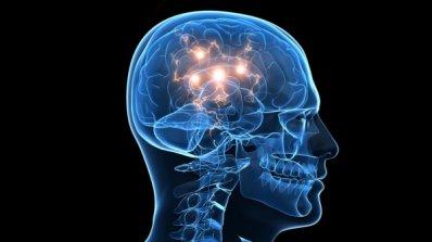 Откриха уникална структура в човешкия мозък