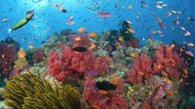 Големият бариерен риф може да се превърне в сметище