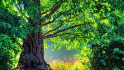 10 странни неща, които умеят дърветата (снимки)