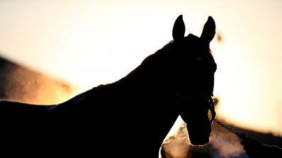 Шофьор се блъсна в кон