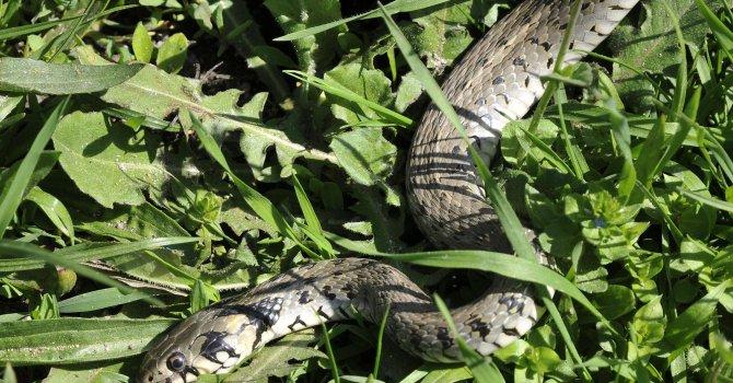 Змия ухапа мъж