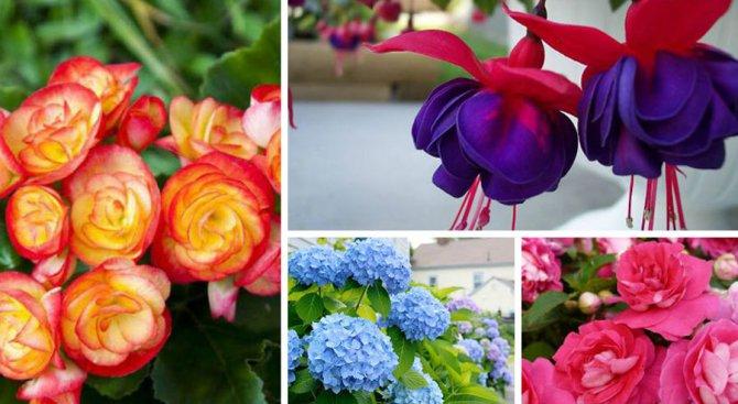 5 лесни за отглеждане балконски цветя