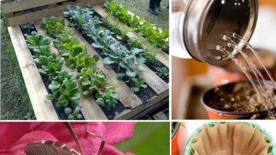 Съвети и трикове за градината, които ще се радвате да научите