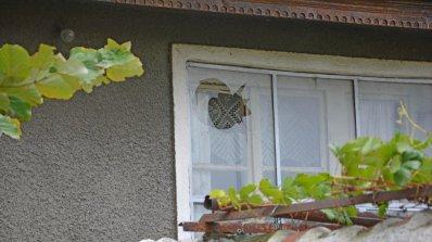 Атентат срещу кандидат за кмет на сливенско село (снимки)