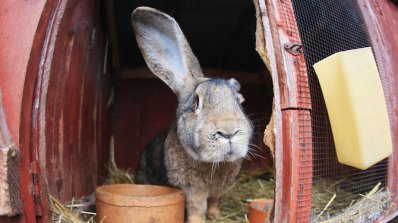 Ферма за зайци - новата мода за източване на евросредства