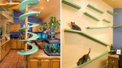 Котката - вашият дом е нейната крепост