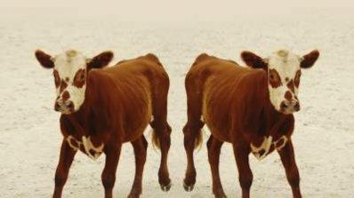 Китай подготвя най-големия център за клониране на животни