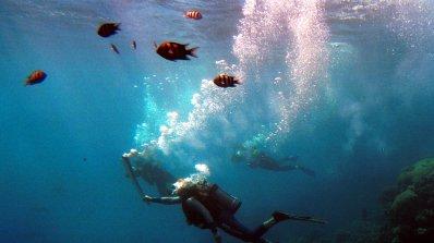 Големият бариерен риф вече е във виртуалния свят (видео)
