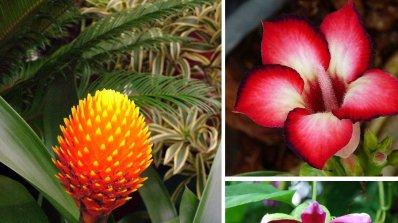 Разкошни екзотични цветя, които може да отгледате у дома