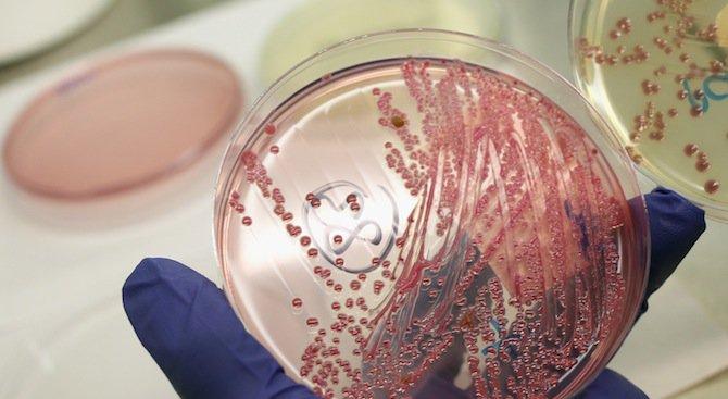 Бактериите са устойчиви на антибиотиците заради ген