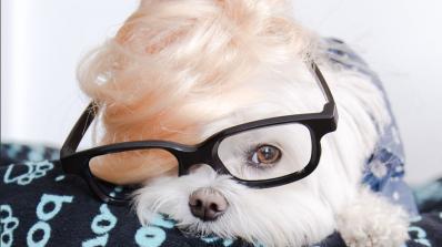 Запознайте се с Тоби - най-очарователното куче в Instagram