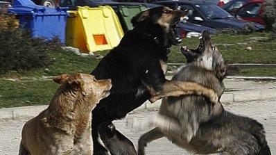 Маскират кучешки боеве като изложби